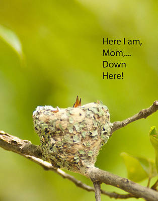 Photograph - Here I Am Mom by Don Wolf