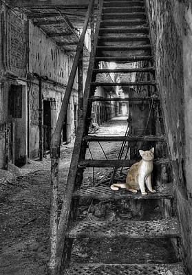 Philadelphia History Photograph - Here Kitty Kitty Kitty... by Evelina Kremsdorf