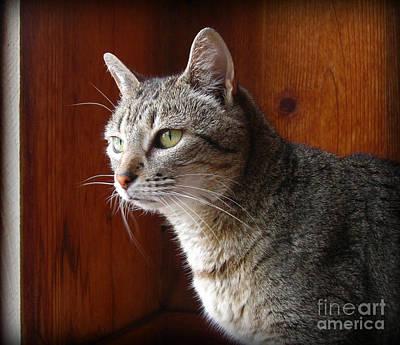 Gray Tabby Photograph - Here Kitty Kitty by Mandy Shupp