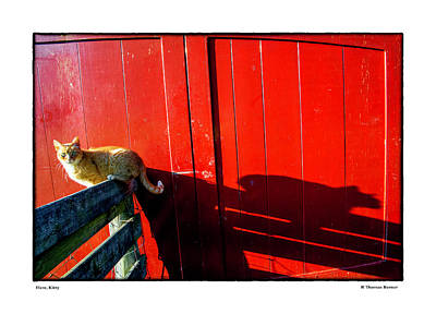 Photograph - Here, Kitty by R Thomas Berner