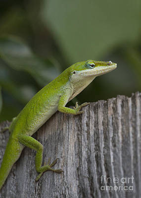 Photograph - Here Lizard Lizard Lizard by D Wallace