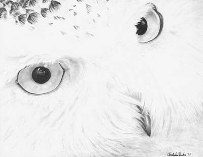 Nature Drawing - Here's Lookin' At You by Christopher Brooks