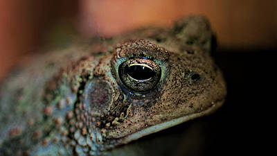 Photograph - Heres Looking At You by Philip A Swiderski Jr