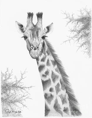 Giraffe Drawing - Here's Looking At You by Phyllis Howard
