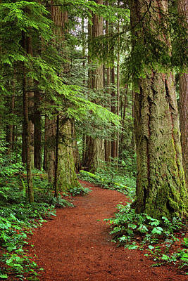 Photograph - Heritage Forest 2 by Randy Hall