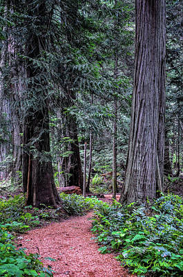 Photograph - Heritage Trail by Roxy Hurtubise