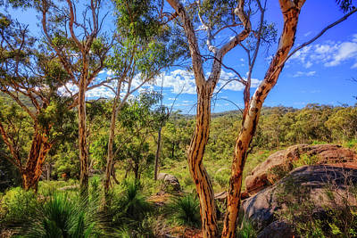 Print featuring the photograph Heritage View, John Forest National Park by Dave Catley