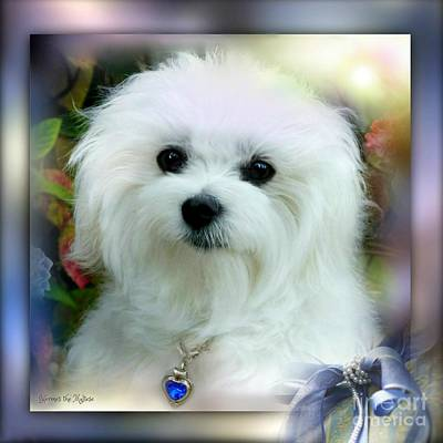 Mixed Media - Hermes The Maltese 01 by Morag Bates
