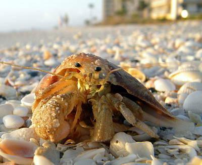 Photograph - Hermit D. Crab by Sean Allen