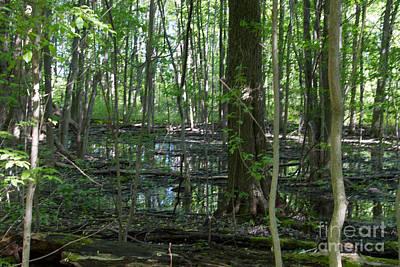 Photograph - Hermit Swamp by William Norton