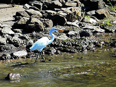 Photograph - Heron 4 by Ron Kandt