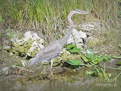 Photograph - Heron Adventure by Judy Kay
