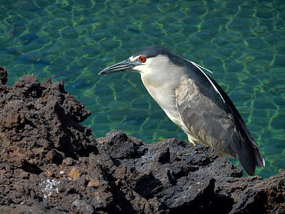 Photograph - Heron Against The Water by Pamela Walton