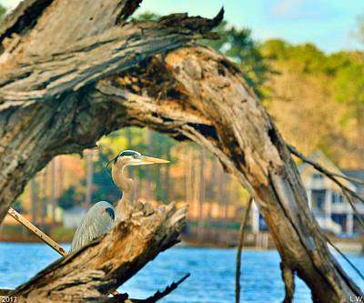 Heron Among The Trees  Art Print