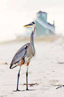 Animals Photos - Heron and the Beach House by Joan McCool