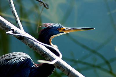 Photograph - Heron At Lakes Park by David Weeks