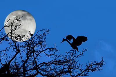 Photograph - Heron At Night by Arterra Picture Library