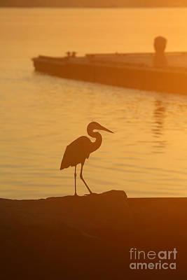 Photograph - Heron At Sunrise by Lara Morrison