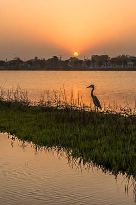 Photograph - Heron At Sunset by Leticia Latocki