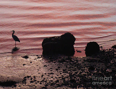 Photograph - Heron At Sunset by Lydia L Kramer