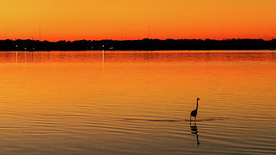 Photograph - Heron At Sunset by Stefan Mazzola