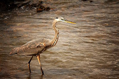 Photograph - Heron At The Lake by Greg Simmons