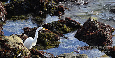 Polaroid Camera - Heron at the TIde Pools by Debby Pueschel