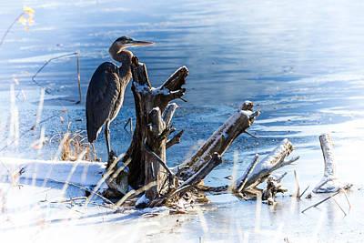 Big Thompson River Photograph - Heron At Thompson Falls by Bryan Moore
