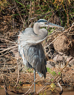 Photograph - Heron Balance by Loree Johnson