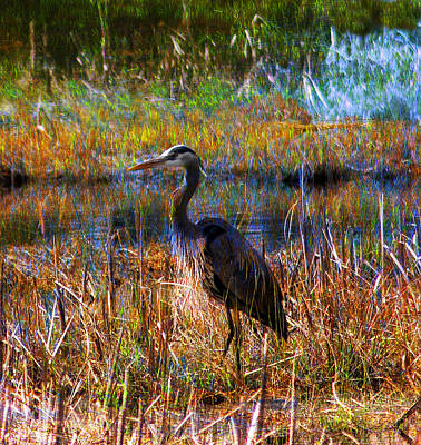 Photograph - Heron Blue by Melvin Kearney