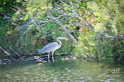 Photograph - Heron By River's Edge by Judy Kay