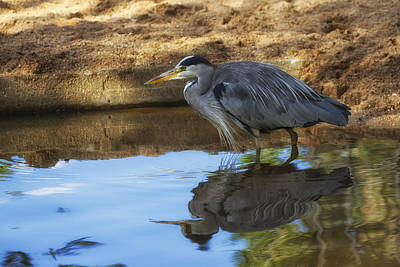 Photograph - Heron by Clare Bambers