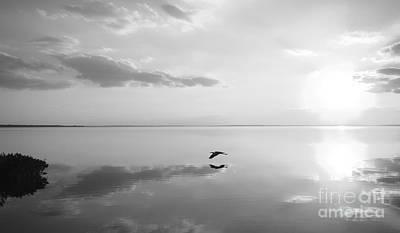 Jak Photograph - Heron Crossing by Jack Norton