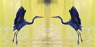 Photograph - Heron Dance by Jim Dollar