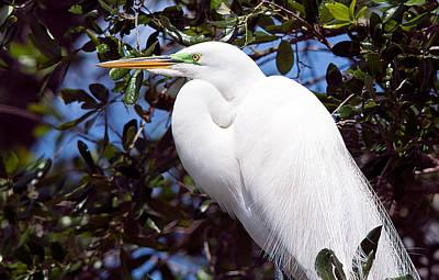 Photograph - Heron Deep Contemplation by Kenneth Albin
