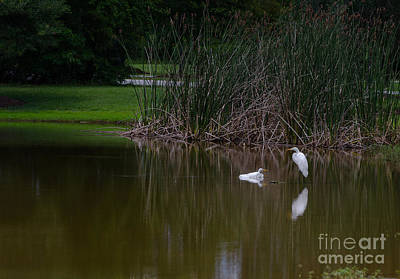 Photograph - Heron Estuary by Dale Powell