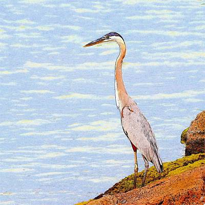 Photograph - Heron Fishing Sketch by Kristina Deane