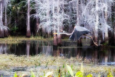 Bird Photograph - Heron Flight by J Darrell Hutto