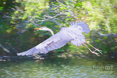 Painting - Heron Fly By by Judy Kay