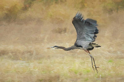 Photograph - Heron Flying Abstract by Belinda Greb
