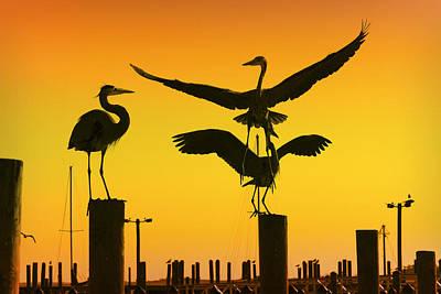 Heron Gathering Art Print