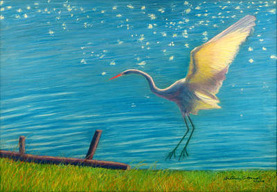 Heron Great White   Pastel   Art Print by Antonia Citrino