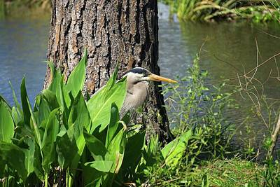 Photograph - Heron Green by Martin Naugher
