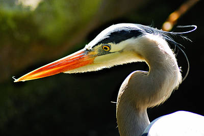 Photograph - Heron by Harry Spitz