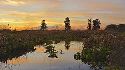 Photograph - Heron Hideout Sunset by Carol Bradley