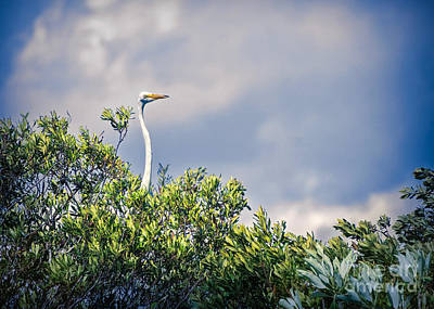 Photograph - Heron Hiding Out by Judy Kay