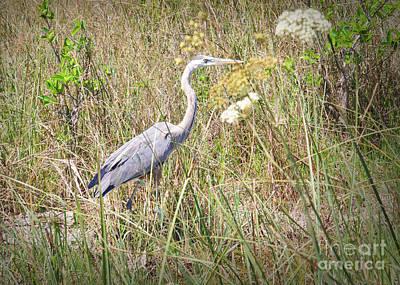 Wildlife Photograph - Heron Hunt by Judy Kay