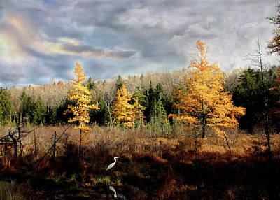 Photograph - Heron In A Larch Bog by Wayne King