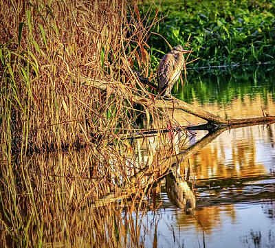 Photograph - Heron In Autumn #g9 by Leif Sohlman