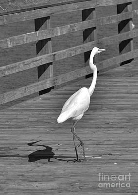 Photograph - Heron In Black And White by Bob Sample